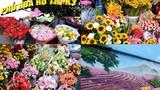 Chiêm ngưỡng phố chuyên kinh doanh hoa đầu tiên ở TP HCM