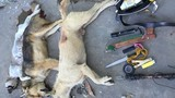 Đồng Nai: 3 kẻ trộm chó dùng ớt bột chống trả khi bị bắt