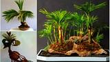 """Chiêm ngưỡng những chậu dừa bonsai """"không thể dị hơn"""""""