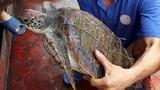 """Phát hiện rùa biển quý hiếm dính lưới, trên mai có nhiều """"hoa văn"""" lạ"""