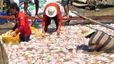 Công bố nguyên nhân ban đầu 1.500 tấn cá chết nổi trắng sông La Ngà