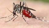 Hàng nghìn trẻ bị teo não do virus ăn não từ muỗi