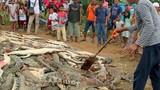 Hàng trăm con cá sấu bị thảm sát gây kinh hoàng