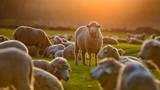 """Mở cửa cho con gái xem cừu, người cha nhận bài học """"sốc"""""""