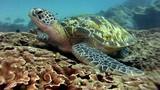 Sốc khi nhìn thấy thứ này trong bụng rùa biển xanh ở Thái Lan