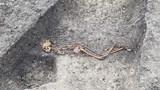 Bí ẩn bộ hài cốt 2.000 tuổi chết khi 2 tay bị trói