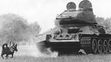 """Vũ khí """"sống"""" nào của Liên Xô khiến đội tăng Đức quốc xã thảm bại?"""