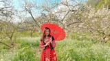 Tranh thủ mùa hoa mận nở, nữ MC VTV hóa gái H'Mông gây sốt mạng