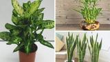 Gia chủ muốn phát tài đừng quên trồng 5 loại cây này trong nhà