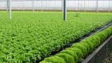 """Thoái vốn tại Sky Life Farms, Sao Thái Dương chi 156 tỷ """"đẻ"""" công ty con khác"""