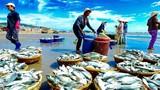 Nam Việt báo lãi giảm 33% trong quý 4/2019 những vẫn nợ hàng trăm tỷ đồng
