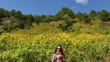 Sắc hoa dã quỳ vàng rực phủ khắp các cung đường Đà Lạt