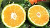 Loạt trái cây không hạt đang gây sốt trên thị trường