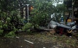 """Giữa """"bão"""" COVID-19, Ấn Độ lại hứng thêm thảm họa tồi tệ khác"""
