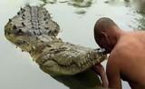 """Kỳ lạ con cá sấu """"ăn chay"""" sống hơn 70 năm trong ngôi đền ở Ấn Độ"""