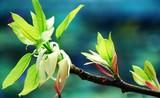 Mùa xuân thiêng liêng và ý nghĩa trong thơ Trần Minh