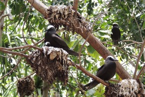 """Loài cây """"tử thần"""" cực nguy hiểm khiến những con chim bỏ mạng"""