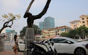 Hà Nội: Hàng cây sưa trăm tỷ được mặc áo giáp sắt đang chết khô
