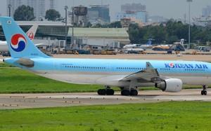 """Máy bay không thể cất cánh vì đàn chim én """"tung tăng"""" ở sân bay Tân Sơn Nhất"""