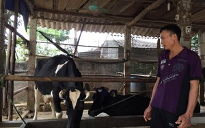 Công ty Sữa Quốc tế IDP tự kiểm định sữa, định giá: Không minh bạch?