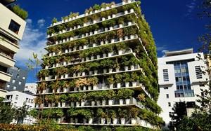 Tận mục tòa nhà phủ trúc xanh lạ lùng giữa lòng Paris