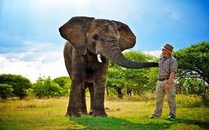 Sự thật gây giật mình về loài voi có thể nói được tiếng người