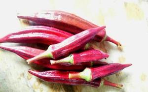 Đậu bắp màu… máu, 300 nghìn/kg, ở Việt Nam chỉ mua được hạt giống