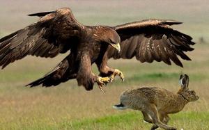 """Bí mật về loài chim ăn thịt khổng lồ phải """"lột xác"""" để sống dai hơn"""