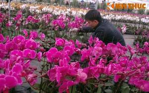 Hình ảnh chợ hoa Xuân 2015 rực rỡ ở Hà Nội