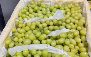 Nho Trung Quốc làm mưa, làm gió thị trường chợ hoa quả online