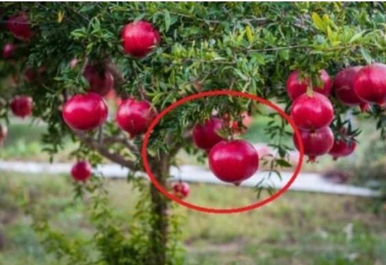 3 loại cây con cưng Thần Tài: Trồng trước nhà tài lộc ùn ùn kéo tới