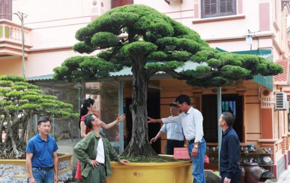 Bộ sưu tập siêu cây cảnh triệu đô của nữ đại gia Phú Thọ