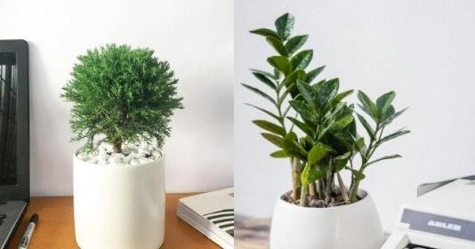 5 loại cây phát tài đặt trên bàn làm việc để hút tài lộc