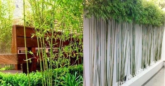 5 loại cây được đại gia chọn để trồng trước cửa nhà