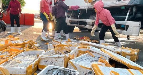 Cá hố trước chuyên xuất khẩu, giờ chỉ làm thức ăn chăn nuôi