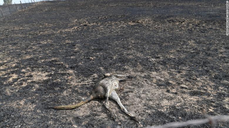 Tham hoa chay rung o Australia: Mat ca 100 nam de phuc hoi-Hinh-9
