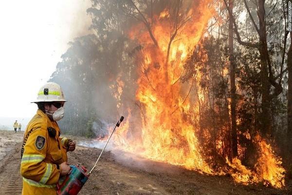 Tham hoa chay rung o Australia: Mat ca 100 nam de phuc hoi