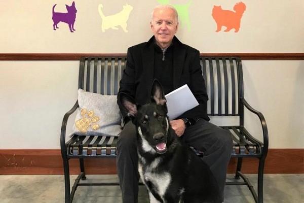 Ong Biden bi trat mat ca chan khi choi dua cung thu cung