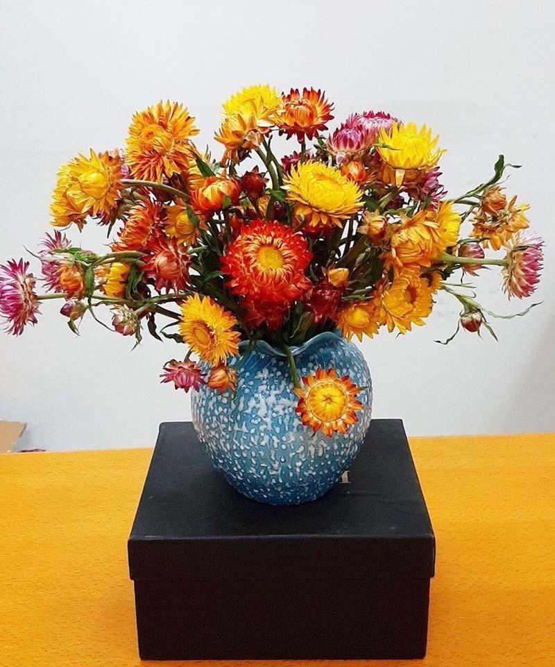 Hoa cuc la chet kho van khong tan-Hinh-2