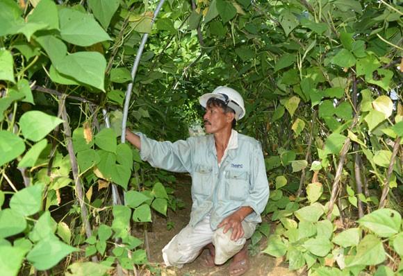 Dan Da Nang hai ra tien nho trong rau sach-Hinh-2