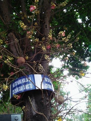 Dung hang gio cho hoa ngoc ky lan rung cau may-Hinh-3