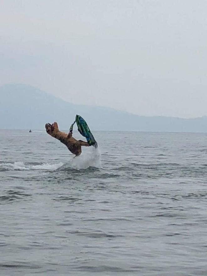 "Khung long ""ngao"" tap luot song khien dan mang cuoi nghieng nga-Hinh-4"