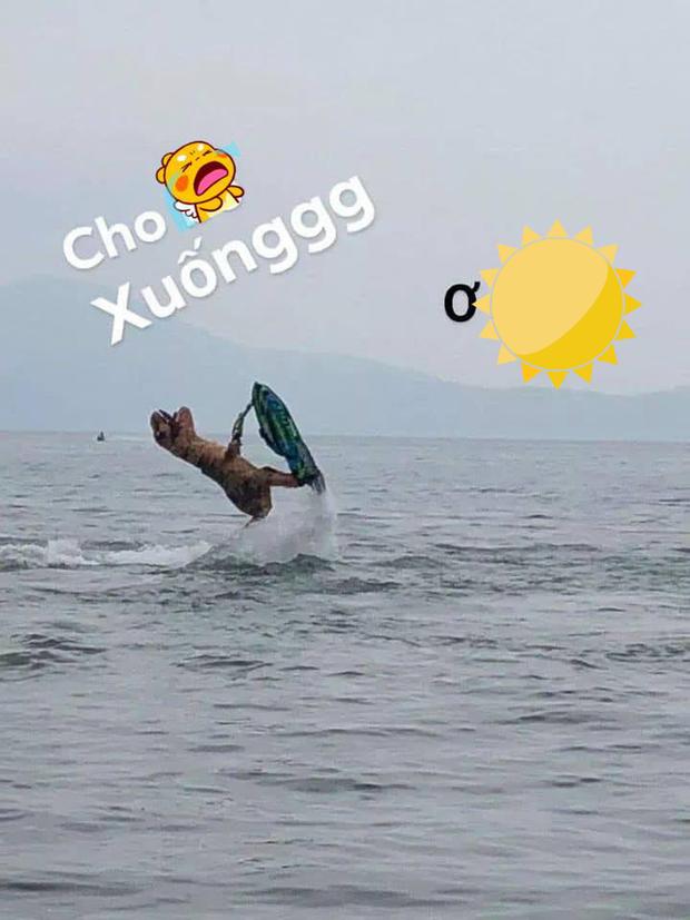 "Khung long ""ngao"" tap luot song khien dan mang cuoi nghieng nga-Hinh-9"
