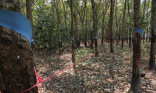 Ly do khong khoi to vu 9 bo xuong nguoi o Tay Ninh-Hinh-3