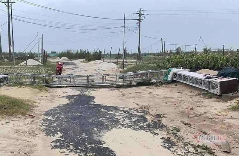Bao so 9: Dao Ly Son tan hoang khi bao di qua-Hinh-10