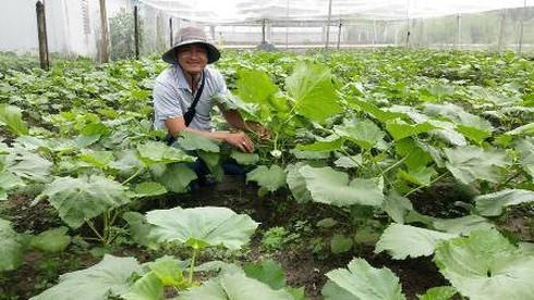 Chang trai bo viec ngan hang luong cao ve trong rau lai 100 trieu/thang-Hinh-2