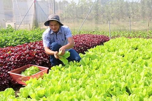 Chang trai bo viec ngan hang luong cao ve trong rau lai 100 trieu/thang-Hinh-3