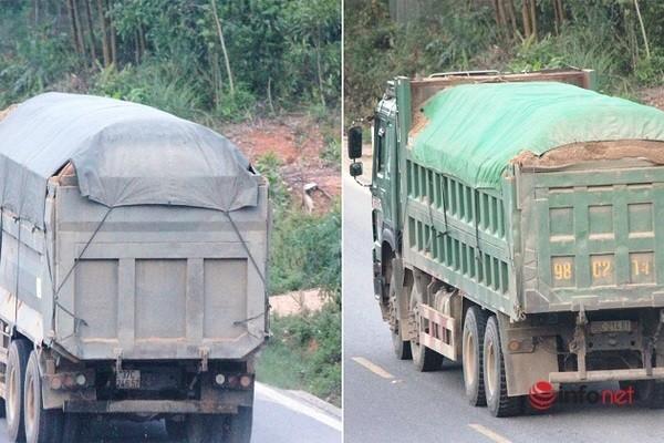 Xe cat noc container cho cat dap ngon 'lam mua lam gio', CSGT bo tay-Hinh-14