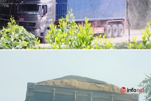 Xe cat noc container cho cat dap ngon 'lam mua lam gio', CSGT bo tay-Hinh-7