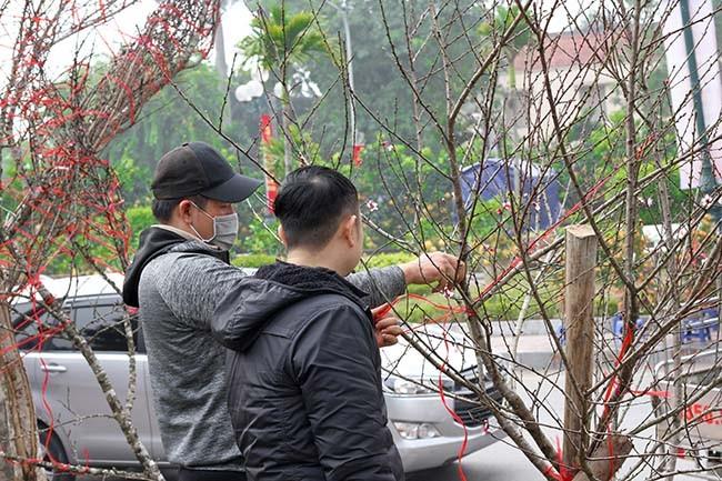 Lo dao dan tem dau tien xuong Ha Noi phuc vu Tet Nguyen dan-Hinh-3